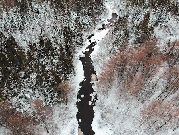 Bruine bomen bedekt met sneeuw overdag