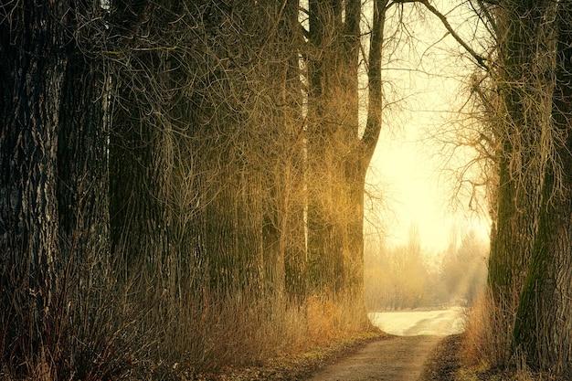Bruine bomen op bruine onverharde weg overdag