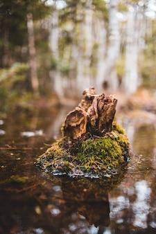 Bruine boomstam op water