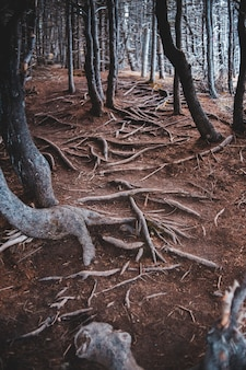 Bruine boomstammen in donker bos