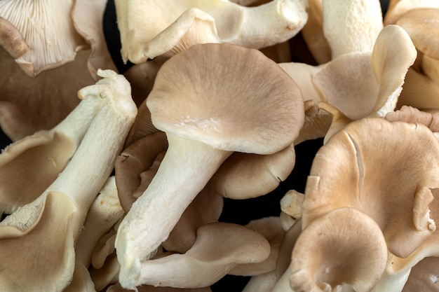 Bruine champignons op donkere achtergrond