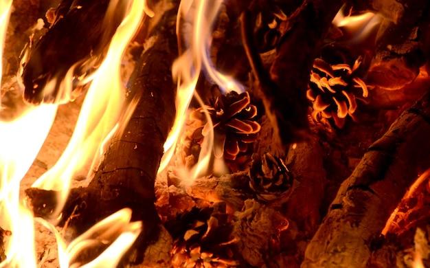 Bruine dennenappel branden in het vuur met vlam
