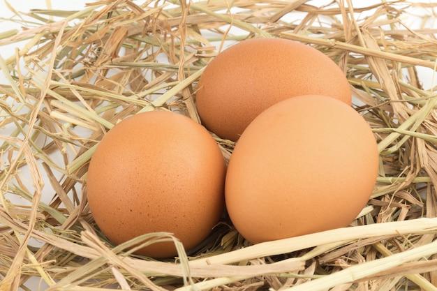 Bruine eieren in een nest dat op een witte achtergrond wordt geïsoleerd