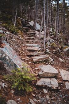 Bruine en grijze rotsen in bos overdag