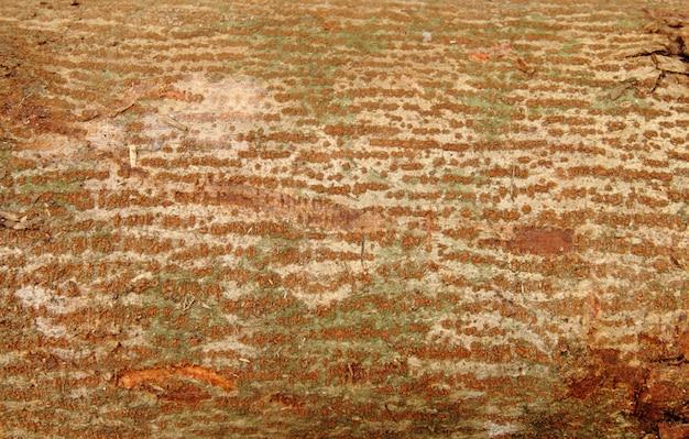 Bruine en groene schorstextuur voor achtergrond