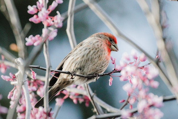 Bruine en rode vogel op roze bloem