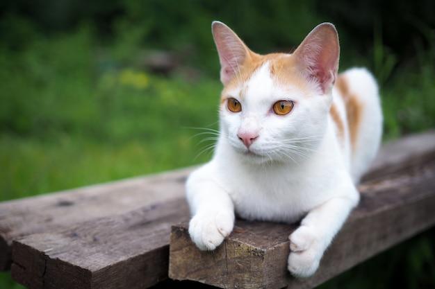 Bruine en witte kat thai op oude houten in aardlandschap