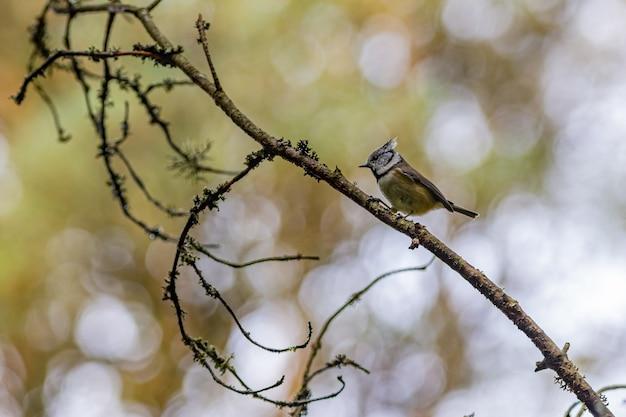 Bruine en witte vogel op bruine boomtak