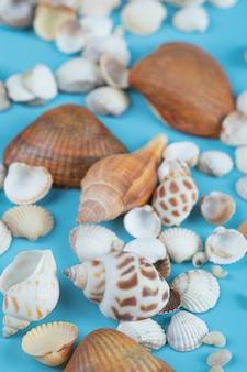 Bruine en witte zeeschelpen op blauw.
