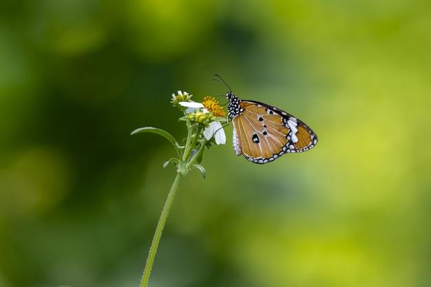 Bruine en zwarte vlinder die op bloem wordt neergestreken