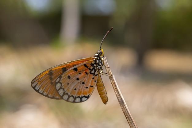 Bruine en zwarte vlinder op stam