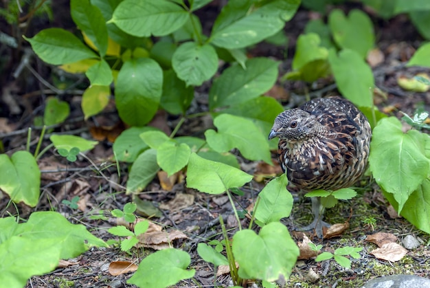 Bruine en zwarte vogel die zich op grond bevindt die door vele groene bladeren wordt omringd