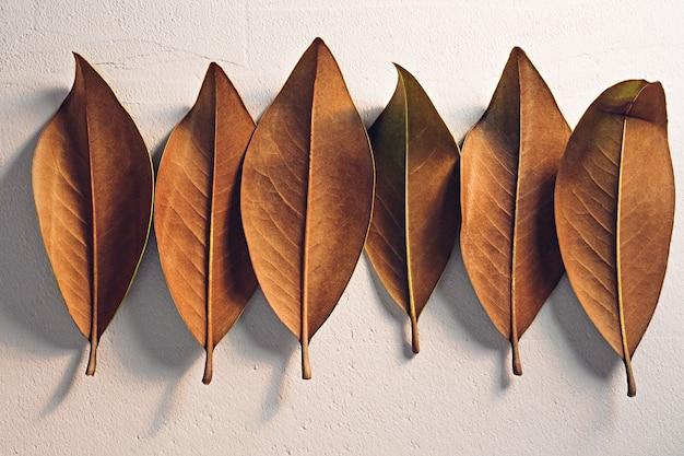 Bruine herfstbladeren op een witte gestructureerde kleiachtergrond