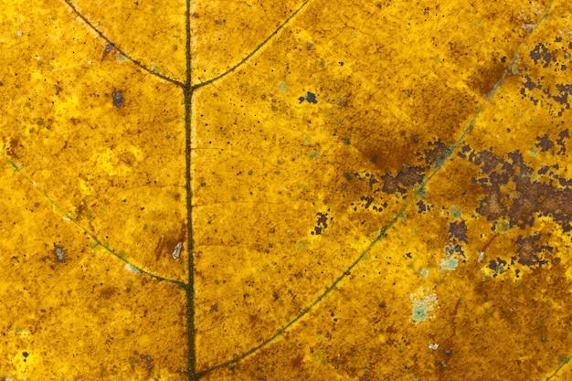 Bruine herfstbladeren textuur achtergrond