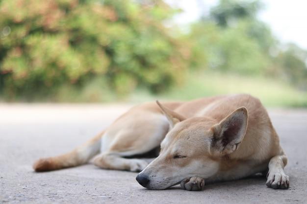 Bruine hond die op de grond slaapt