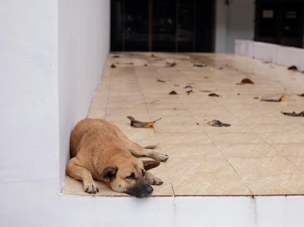 Bruine hond die op de vloer ligt