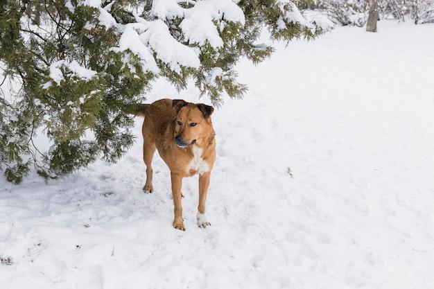 Bruine hond die zich op sneeuwlandschap in de winterdag bevindt