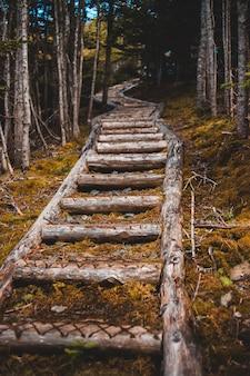 Bruine houten treden in bos overdag