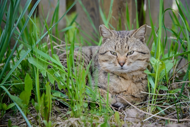 Bruine kat in het gras