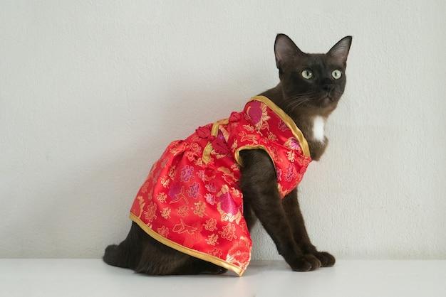 Bruine kat in rode cheongsam-jurk