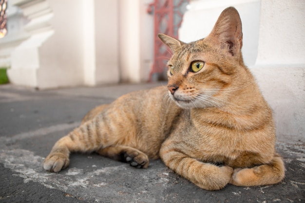 Bruine kat met gele ogen en een halve maan van zwarte ogen kijken.