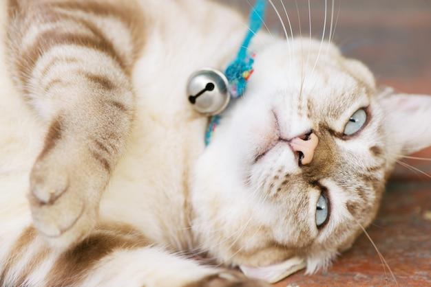 Bruine kat rust in een bizarre houding.