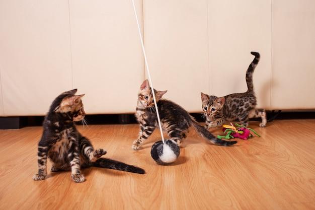 Bruine kleine bengaalse luipaardtijgerkatjes spelen in het appartement