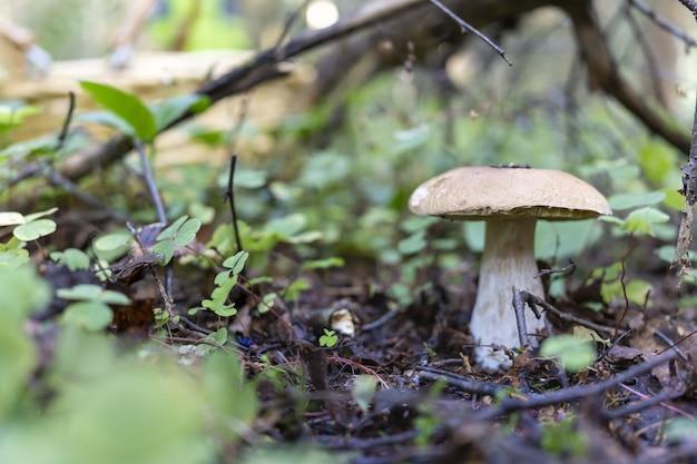Bruine paddenstoel op een bruine achtergrond herfstpaddestoelen plukken hobby's in de natuur natuurlijke producten