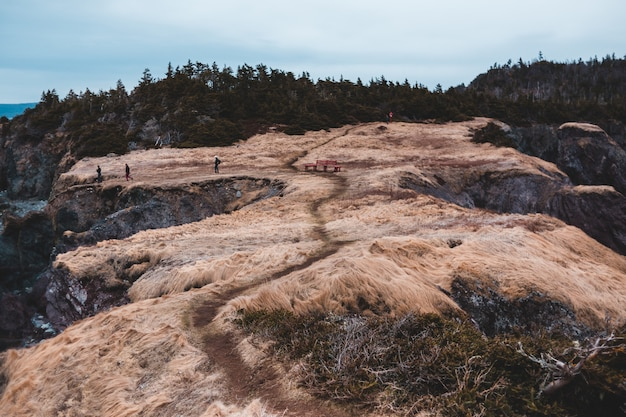 Bruine rotsachtige berg met groene bomen onder blauwe hemel overdag
