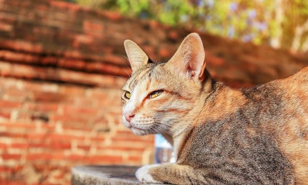 Bruine schattige kat aan de muur