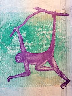 Bruine spin aap illustratie van venezolaanse geld