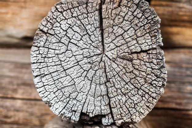 Bruine stronk met leeftijd jaar boom ruw verouderd hout