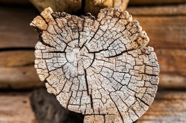 Bruine tak met leeftijd jaar boomstructuur boomdoorsnede