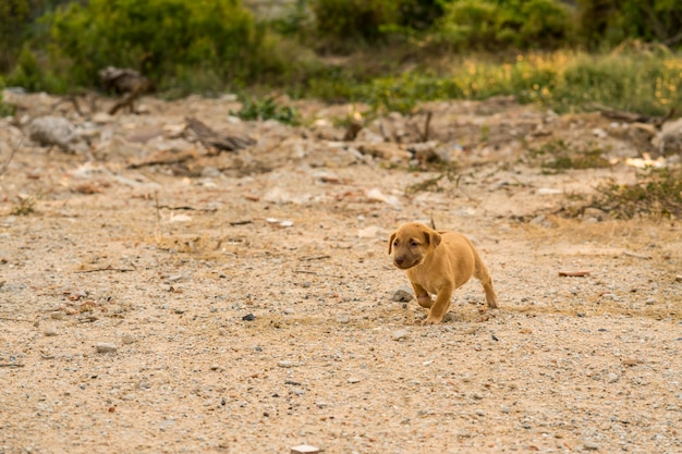 Bruine verdwaalde puppyzitting ter plaatse