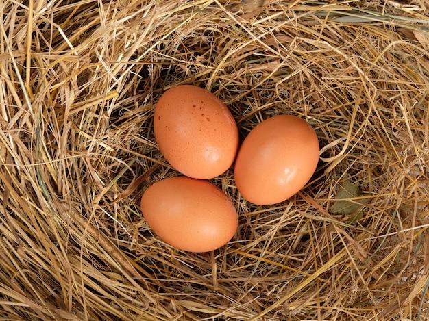 Bruine verse eieren in stro bovenaanzicht, kippeneieren in het nest.