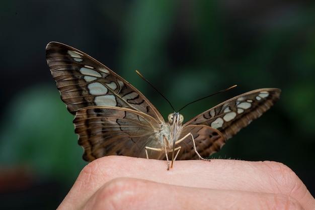 Bruine vlinder die zich op een hand bevindt
