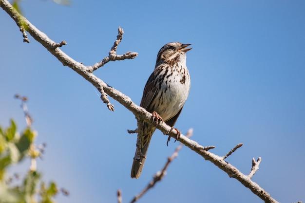 Bruine vogel op bruine boomtak overdag