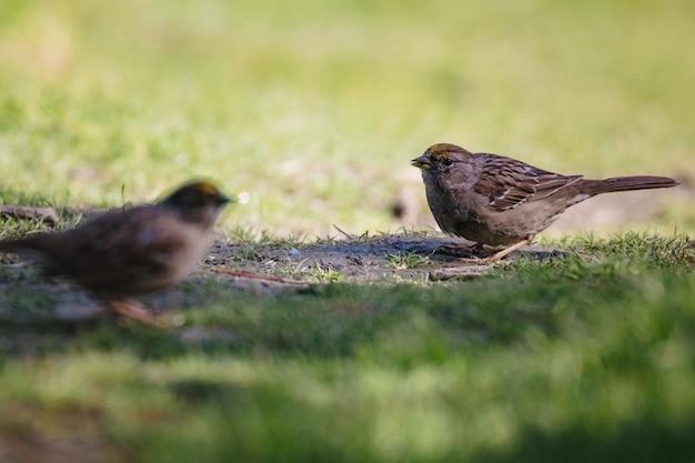 Bruine vogel op groen gras overdag