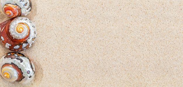 Bruine zeeschelpen nautilus op schoon wit zand, kopie ruimte, bovenaanzicht, banner