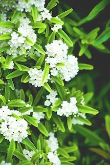 Brunch met witte bloemen