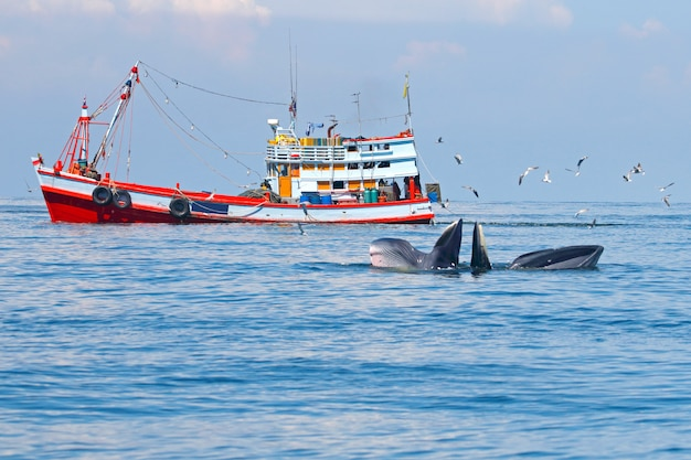 Bryde's whale balaenoptera eden en vissersboot in de zee