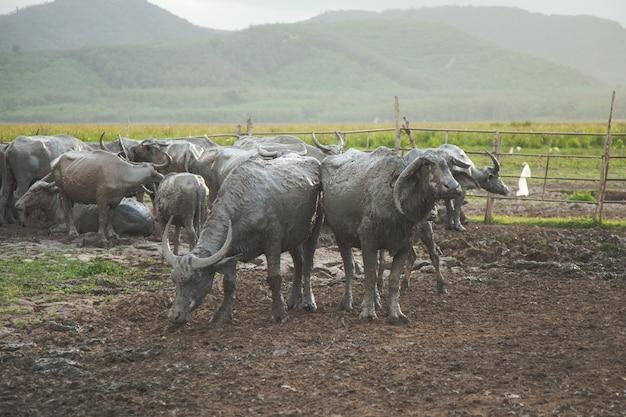 Buffel die is opgeheven in de behuizing
