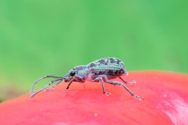 Bug op bladeren