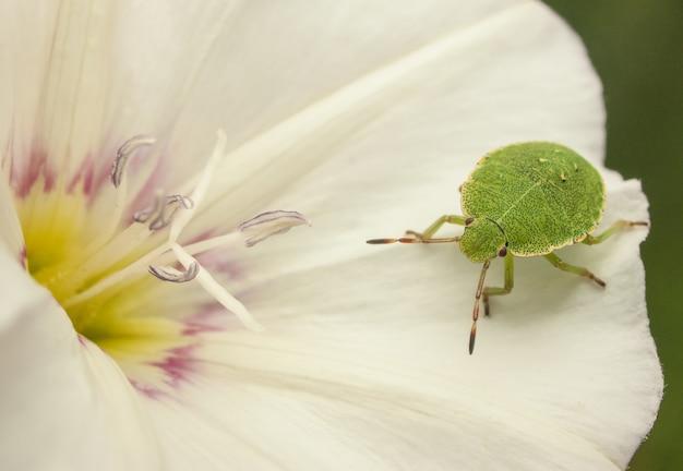 Bug op een bloem