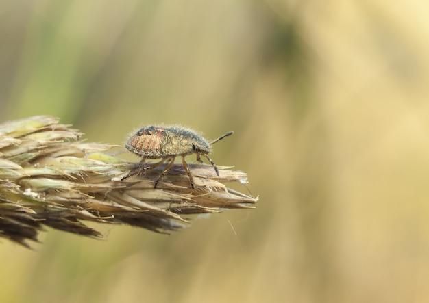 Bug Gratis Foto