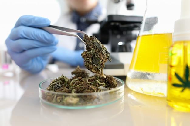Buis met cannabinoïde olie en bladteken