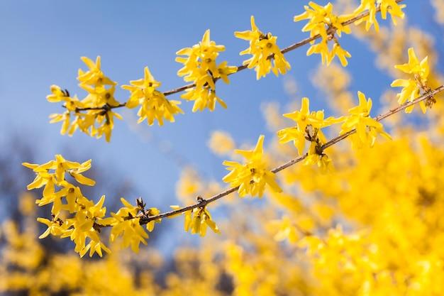 Buiten bloemen