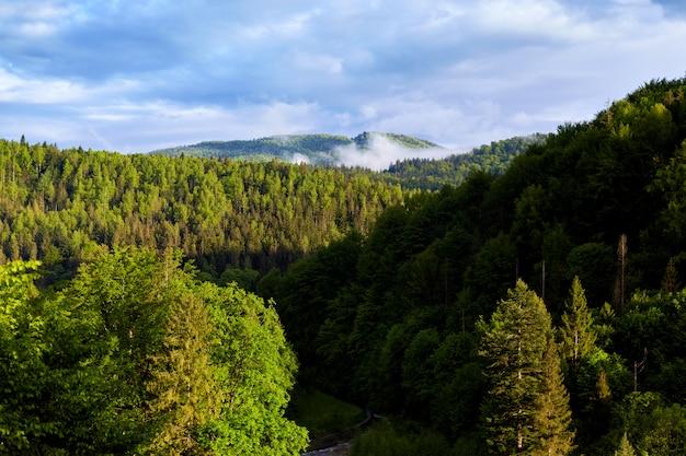 Buiten foto van prachtige landschap van bos, veel groene bomen, blauwe lucht met wolken, mooie zomerse dag