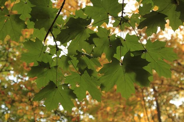 Buiten herfst groene bladeren op valley forge park