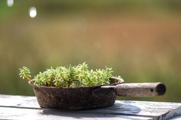 Buiten plantenbakken met oude koekenpan gebruikt als containers.